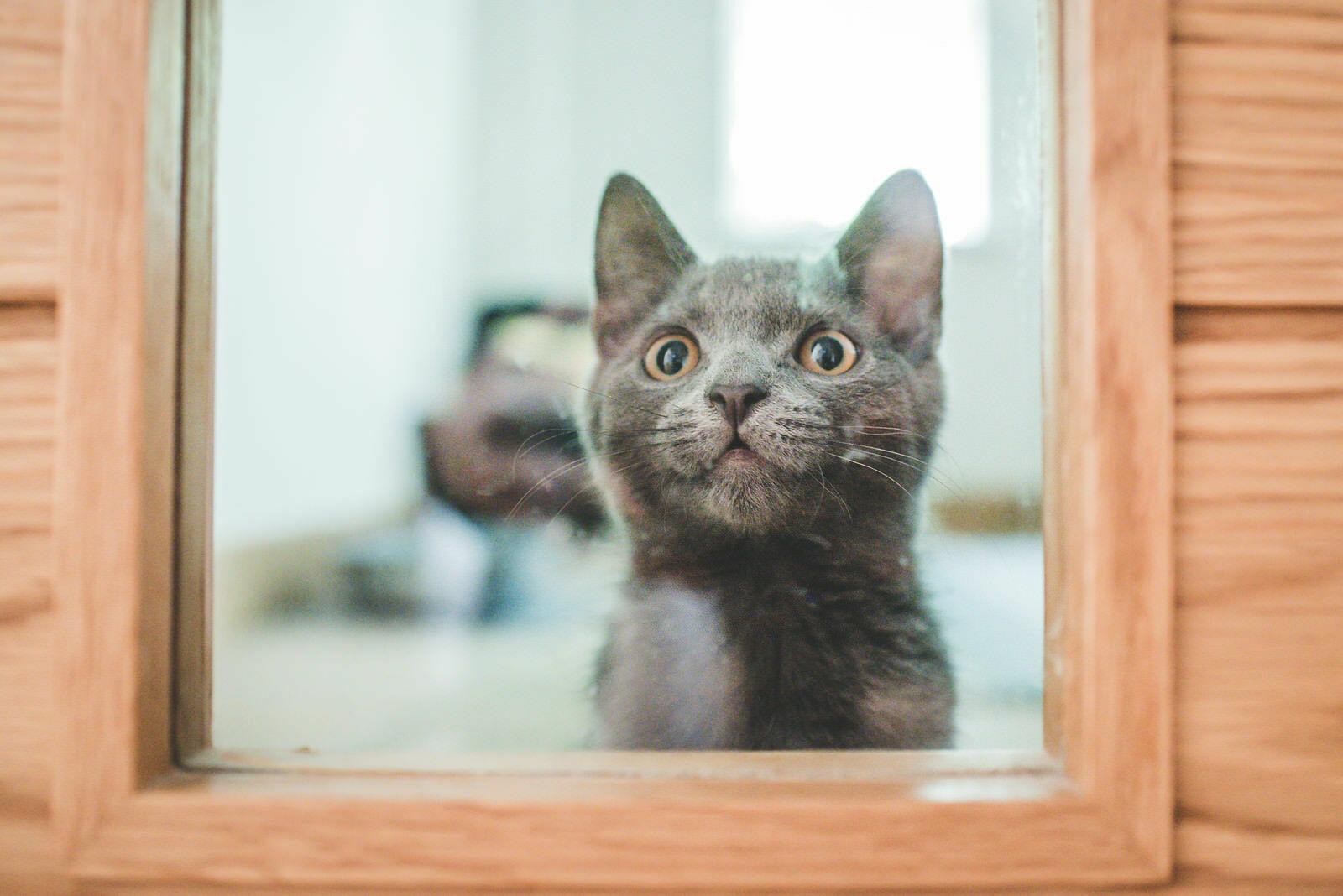 cat watches wedding preparation